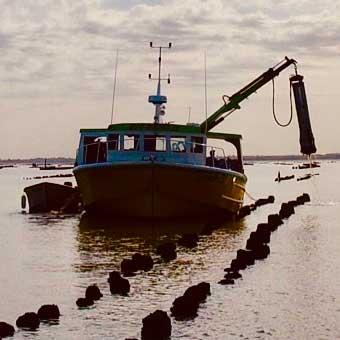 bateau qui récupère des huitres